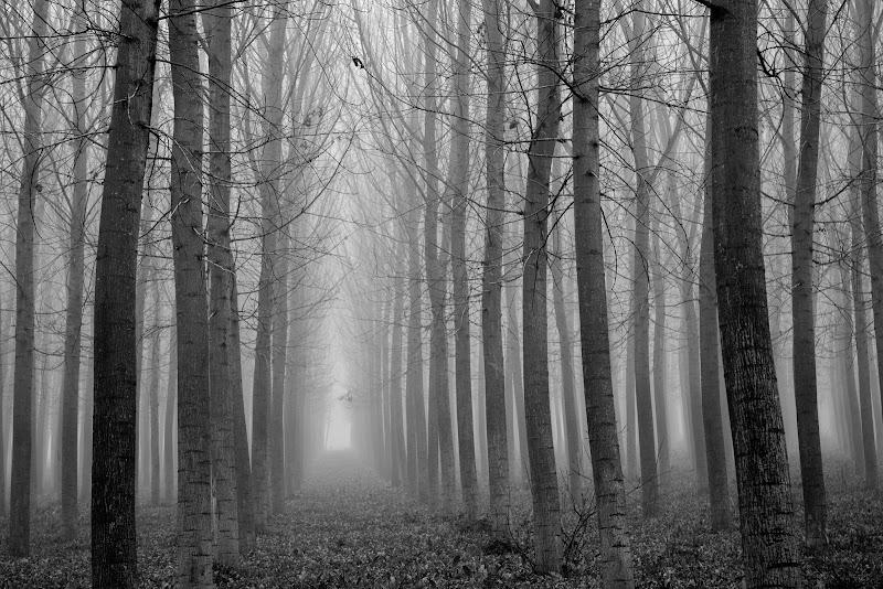 Clowdy trees di Welj