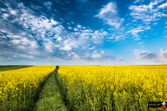 Photo: Follow the path...  #landscape #landscapephotography #path #blue #green #yellow #sky #skyphotography #clouds