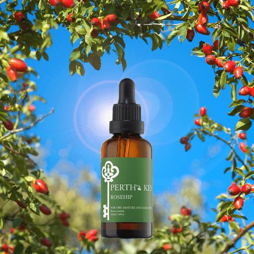 玫瑰果油 Rosehip Oil,智利玫瑰果油,玫瑰果油的用法,玫瑰果油保存,玫瑰果油的功效,玫瑰果油哪裡買,神奇玫瑰果油