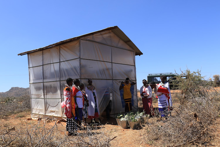 Women from Naibunga Community Conservancy in Laikipia gather at the greenhouse at Margaret Mamai's home, where they propagate the insects. NRT has financed the process.