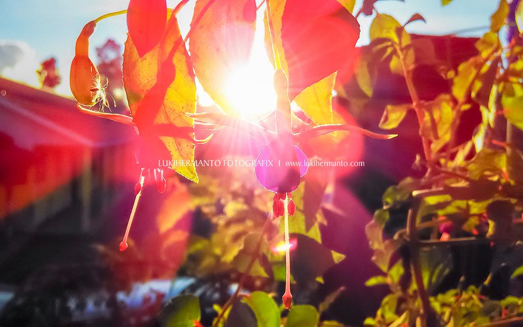 foto matahari terbenam dengan HP