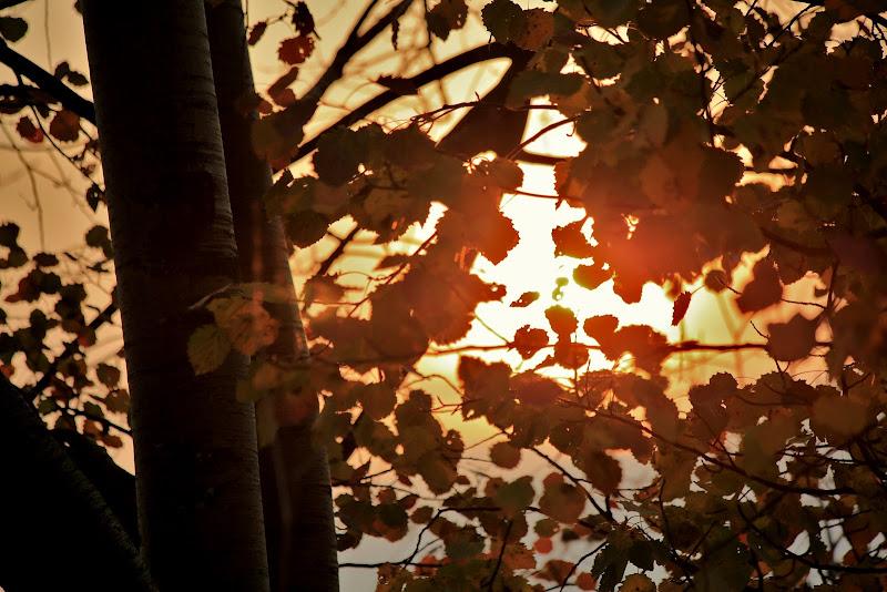 L'Alba ... prime luci del mattino di ScrofaniRosaria