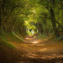 Enchanted by Mark Gower - Landscapes Forests