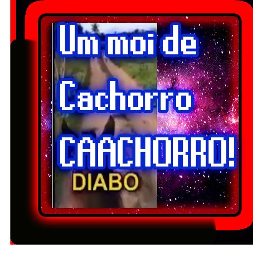 Cachorro Urg Urg Meme South America Memes