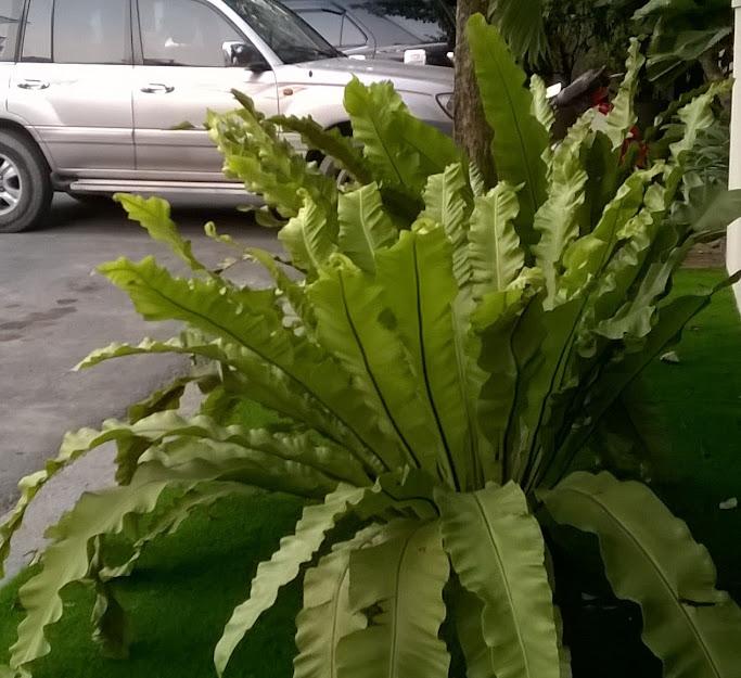 Sử dụng cỏ nhân tạo để tạo sự đặc biệt trong trang trí