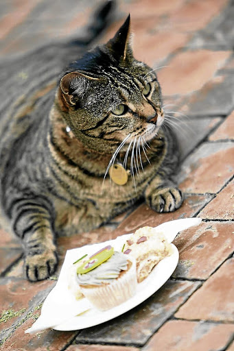 Gadgets galore: Apps that connect things to the internet can now even help to feed the cat. Picture: THE TIMES