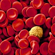 Manual Práctico de Hematología