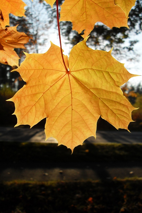 Photo: L for Leaf