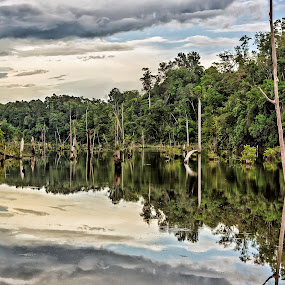 Amazon jungle by Daniel Schwabe - Landscapes Forests ( water, reflection, jungle, trees, forest, manaus, brasil, amazon )