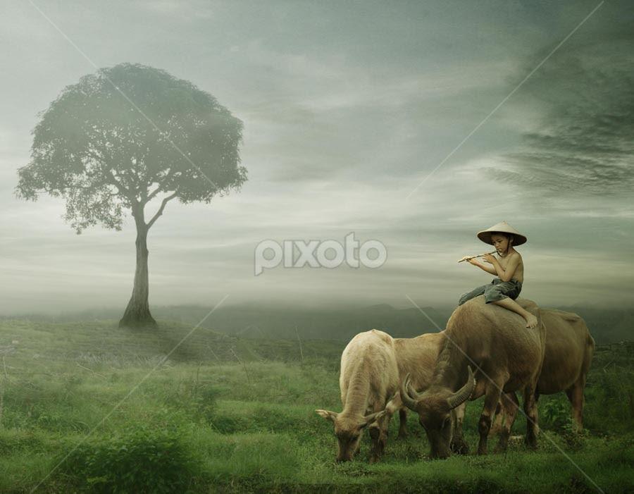 peaceful valley by Budi Cc-line - Digital Art People ( fog, indoesia, mood, people, animal )