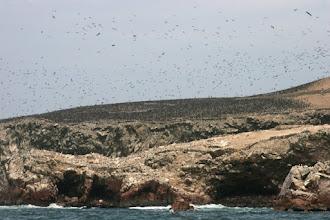 Photo: Des millions d'oiseaux
