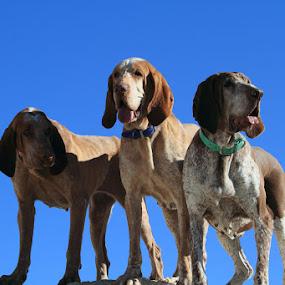 My Girls by Ralph MInnitte - Animals - Dogs Portraits