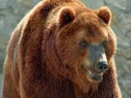 Медведь и человек
