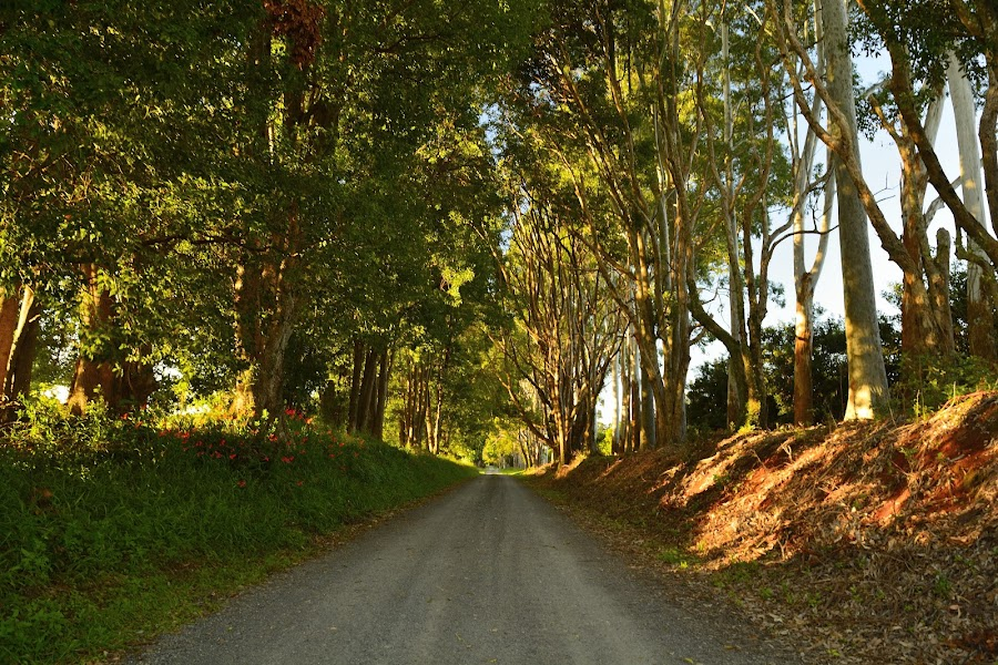 Forrest Road by Matthew Wood - Landscapes Forests
