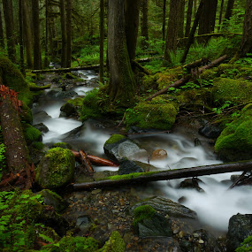 Through the Forrest  by Todd Ivanhoe - Landscapes Waterscapes ( water, stream, logs, moss, trees, forest, creak, ferns, rocks, river )