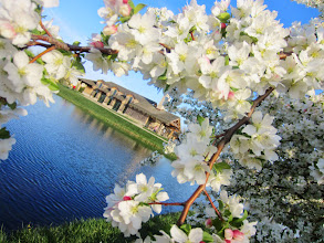 Photo: White apple blossoms arching over a blue lake and building at Cox Arboretum and Gardens Metropark in Dayton, Ohio.