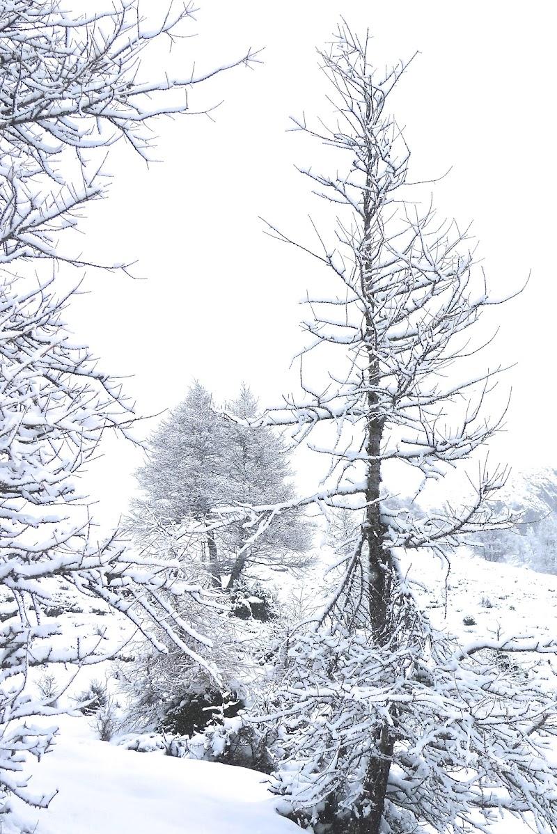 neve e nebbia di Gian78K