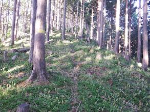 林床は絨毯に