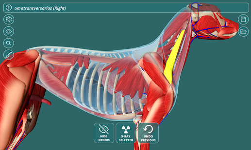 Visual Anatomy 3D - Canine – Apps bei Google Play