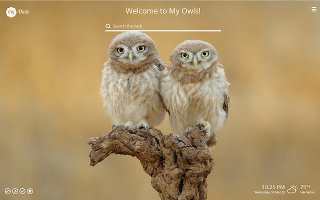 My Owls Lovely Owl Hd Wallpapers