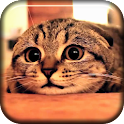Cute Cat Scared Live Wallpaper