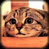 Cute Cat Scared Live Wallpaper