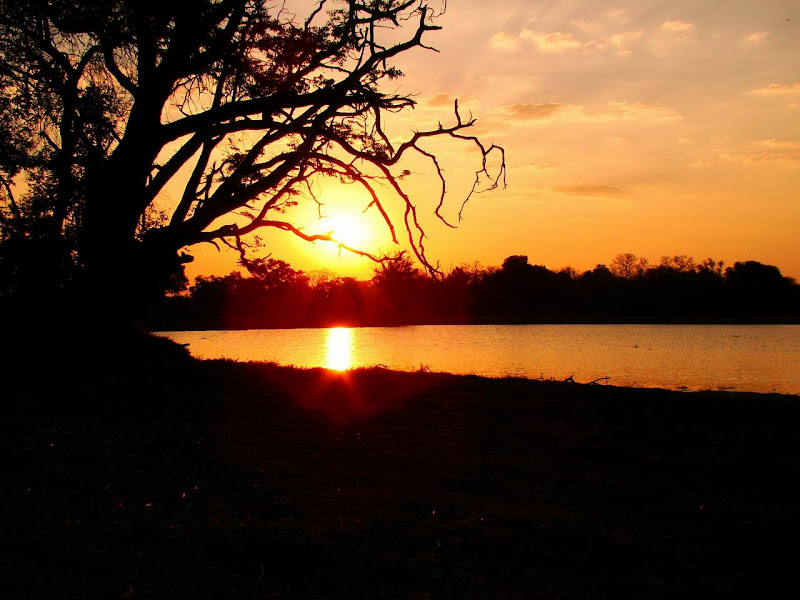 Photo: #180-Coucher de soleil sur le delta de l'Okavango