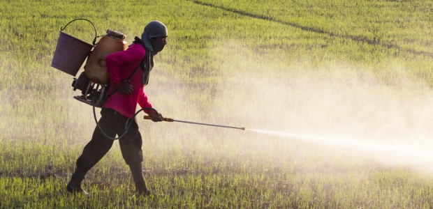 Dangers of Using <span class='ent _Chemical_Pesticides'><span class='ent _Chemical_Pesticides'><span class='ent _Chemical_Pesticides'><span class='ent _Chemical_Pesticides'><span class='ent _Chemical_Pesticides'><span class='ent _Chemical_Pesticides'><span class='ent _Chemical_Pesticides'><span class='ent _Chemical_Pesticides'><span class='ent _Chemical_Pesticides'><span class='ent _Chemical_Pesticides'><span class='ent _Chemical_Pesticides'><span class='ent _Chemical_Pesticides'><span class='ent _Chemical_Pesticides'><span class='ent _Chemical_Pesticides'><span class='ent _Chemical_Pesticides'><span class='ent _Chemical_Pesticides'><span class='ent _Chemical_Pesticides'><span class='ent _Chemical_Pesticides'><span class='ent _Chemical_Pesticides'><span class='ent _Chemical_Pesticides'>Chemical Pesticides</span></span></span></span></span></span></span></span></span></span></span></span></span></span></span></span></span></span></span></span>