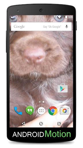 玩個人化App|Cocker background免費|APP試玩