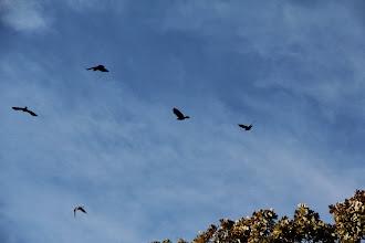 Photo: Crows
