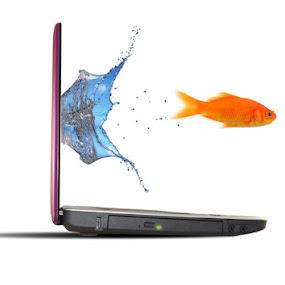 Jumping Fish by Kris Hartanto - Animals Fish ( computer, fish, laptop )
