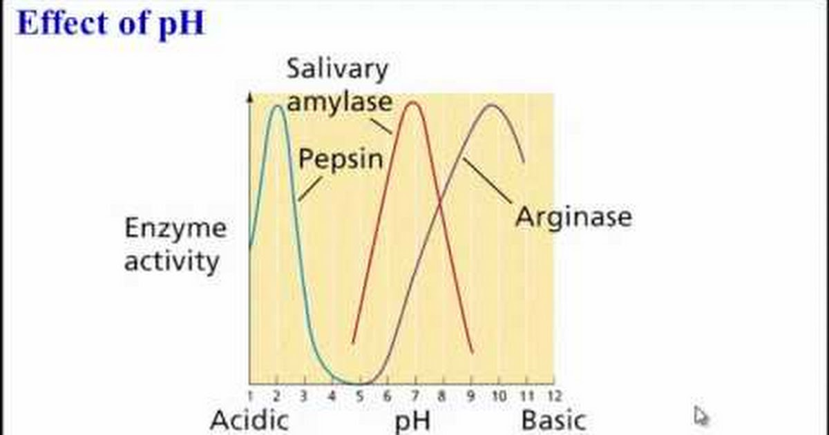 salivary amylase enzyme