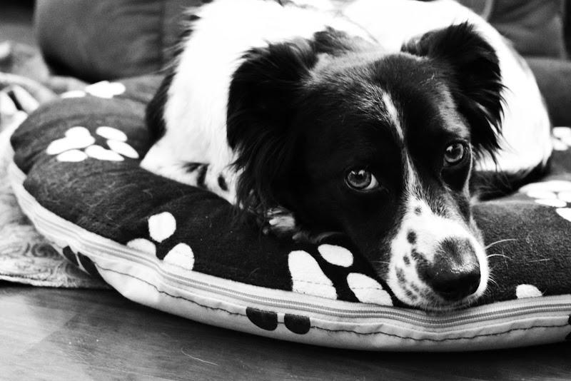 Canina in quarantena❤ di luilop79