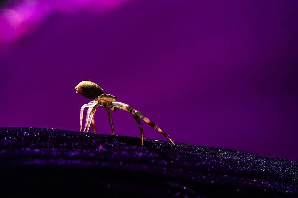 Purple di lauradfm