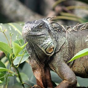 by Nadia Puteri Meutia - Animals Reptiles