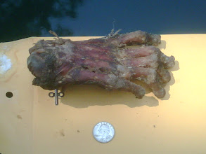 Photo: A reasonable field scale to allow the viewer some sense of size.  These are the kinds of things forensic anthropologists find in their email boxes.