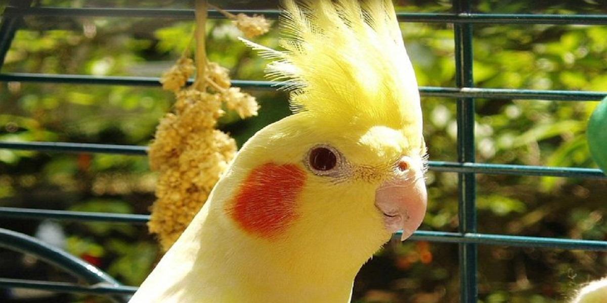 Pássaro em cima de gaiola  Descrição gerada automaticamente
