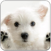 Baby Dog Wallpapers Sakti