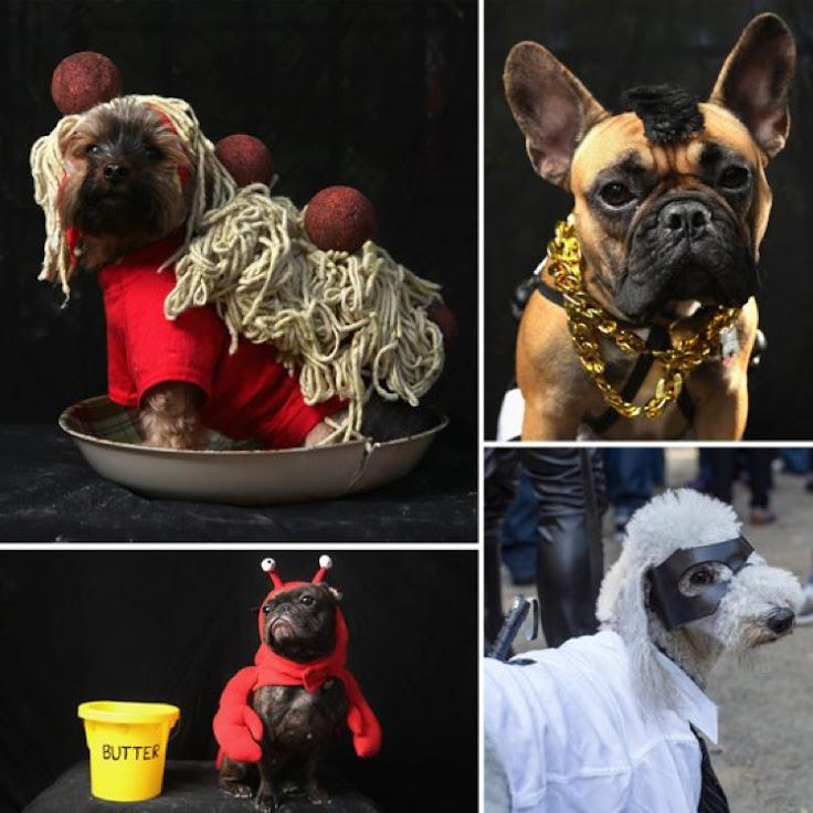 Photo credit: PopSugar https://www.popsugar.com/pets/Tompkins-Square-Park-Halloween-Dog-Parade-2012-Costumes-25554202