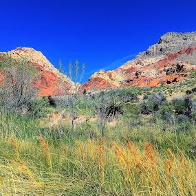 by Diane Garcia - Landscapes Mountains & Hills (  )