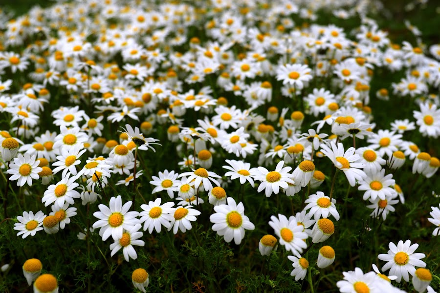 Wild and free by Gil Reis - Flowers Flowers in the Wild ( macro, life, bio, nature, flowers )