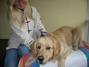 Photo: Walters Birthday Massage was a huge success! Excited and eager, he laid on the bed awaiting his 1 year old Birthday treat. He had a great time and was a model client.