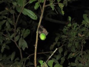 Photo: Fruit bat eating