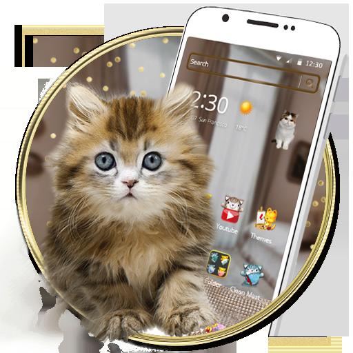 Adorable kitten theme