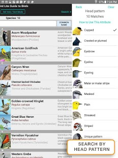 iBird Lite Free Guide to Birds- screenshot thumbnail