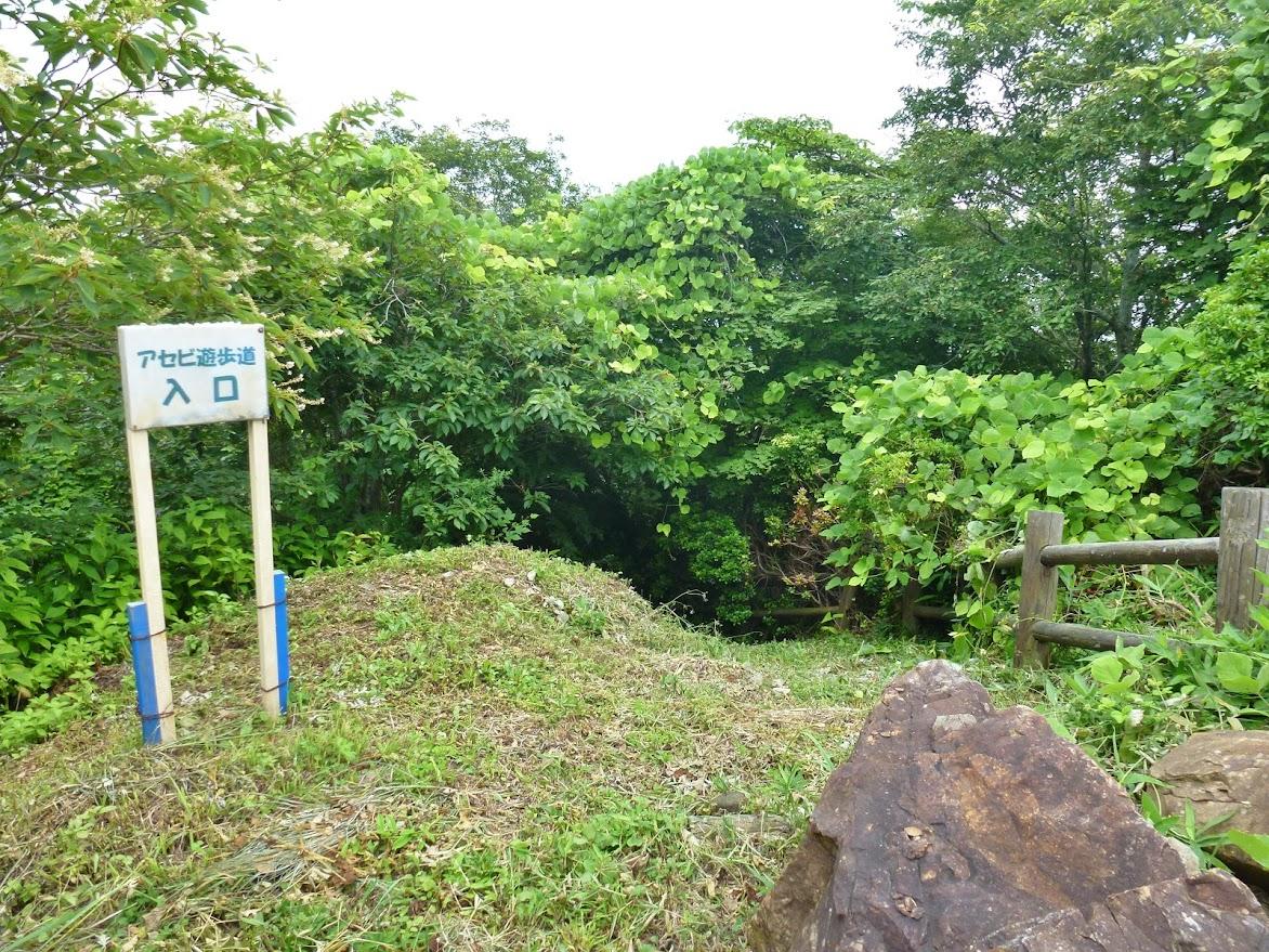 田束山のアセビ遊歩道
