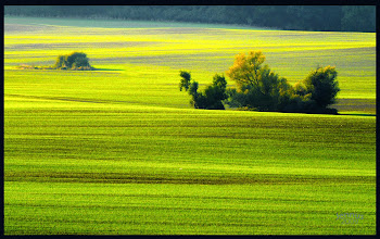 Photo: green farmland