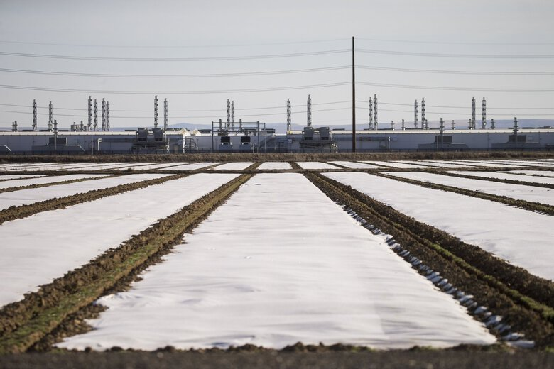 A data center for Microsoft's Azure cloud computing service sits in the distance among covered farm fields in Quincy in 2020. Microsoft and Amazon will play a big role in American readiness for any future cyberwar. That's one reason why foreign hackers are stalking them. (Amanda Snyder / The Seattle Times)