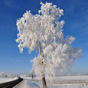 by Albina Jasinskaite - Nature Up Close Trees & Bushes (  )