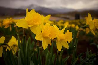 Photo: Trumpet Flowers